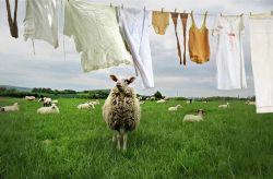 Öko-Waschen